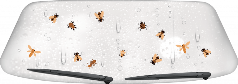 Bugs on windshield